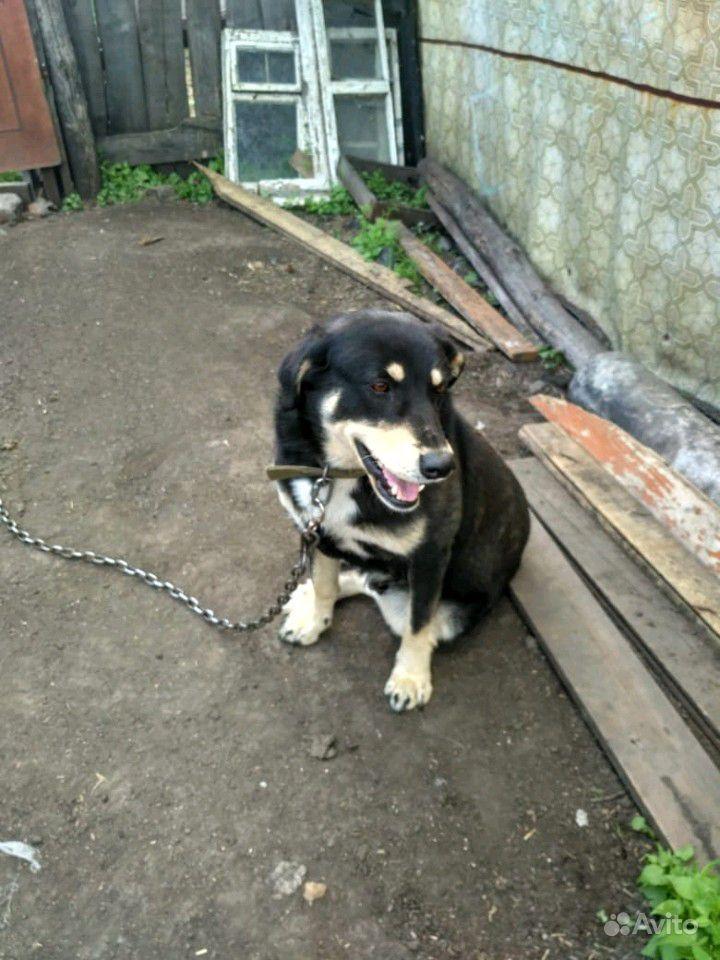 Отдам собак в Омске - фотография № 2