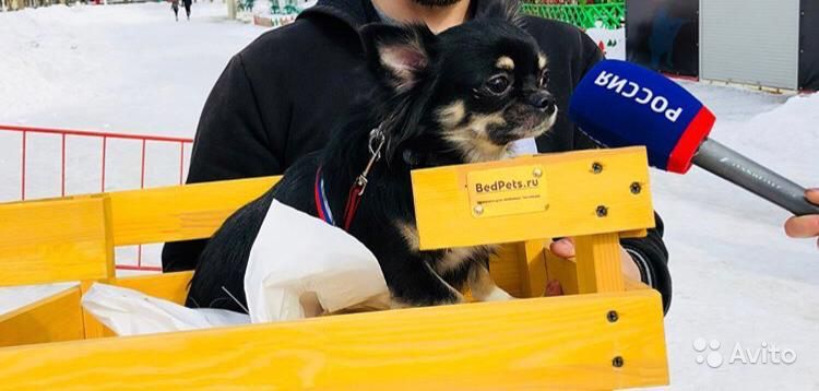 Собаки в Дзержинске - фотография № 2