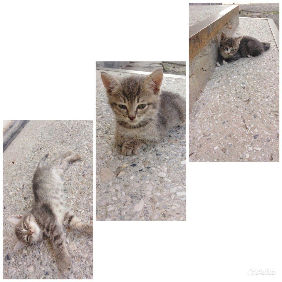 Игривые, ласковые котята в добрые руки