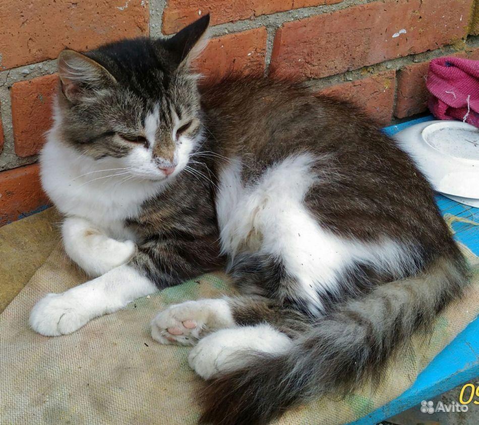 Котята, в добрые руки - фотография № 10
