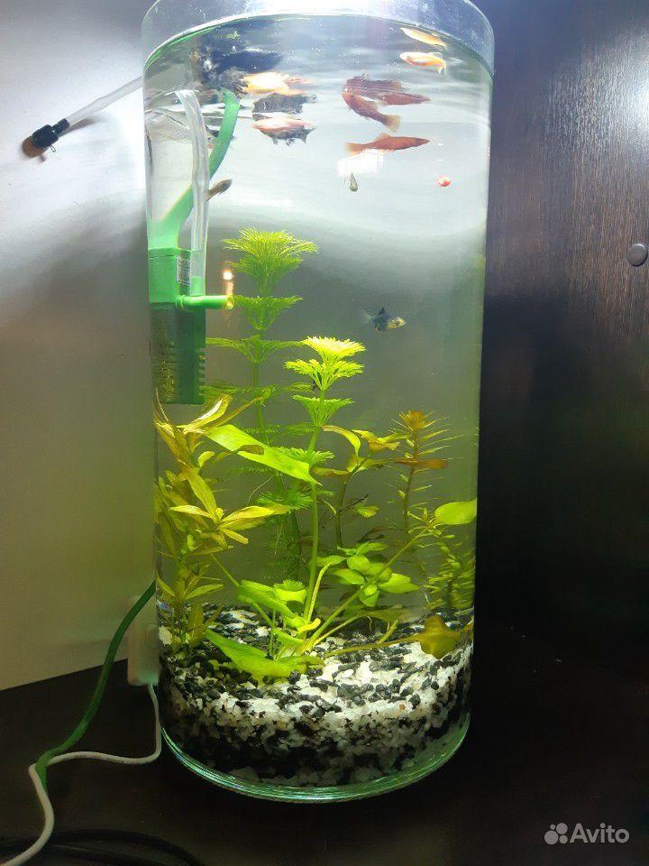 Новый Готовый аквариум цилиндр купить на Зозу.ру - фотография № 1