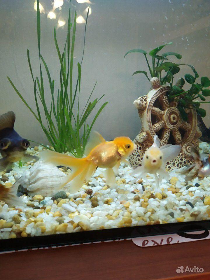 Рыбки купить на Зозу.ру - фотография № 7