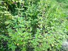 Лекарственные растения объявление продам