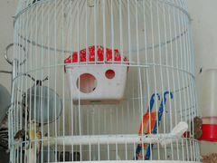 Клетка и попугай
