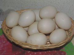 Инкубационные яйца Индоутки