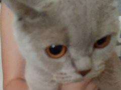 Кошка мурка почти 1 год
