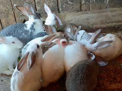 Крольчиха и 13 крольчат