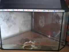 Аквариум угловой+2 черепахи