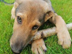 Собака-щенок 3-4 месяца,ищет хозяина