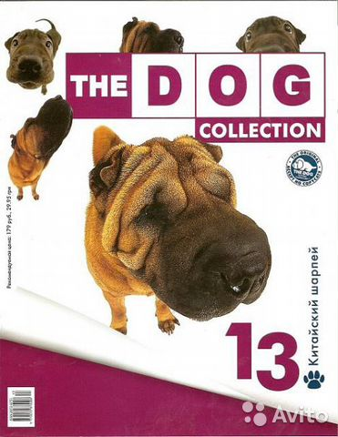 The Dog Collection N13, Шарпей