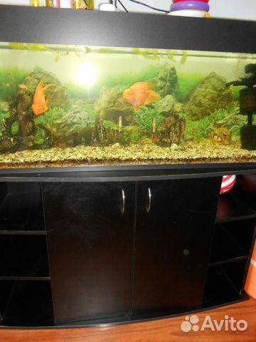 Купить аквариумных рубок в хабаровск