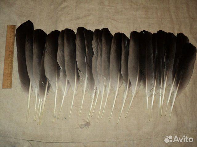 Перо орла (много размеров и расцветок ) купить в