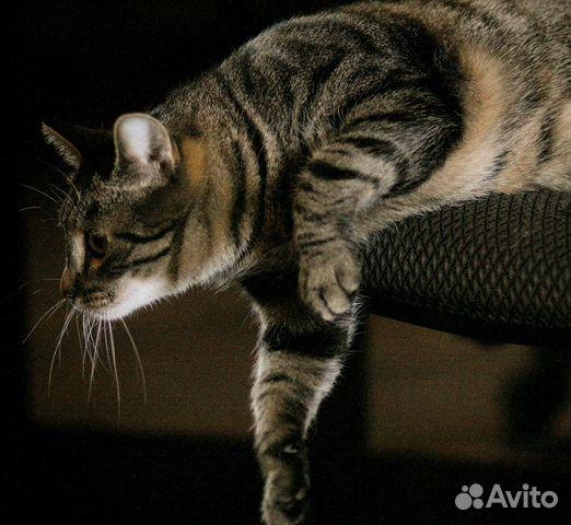 Кошка Бусинка в добрые руки 082a8c86b32a5