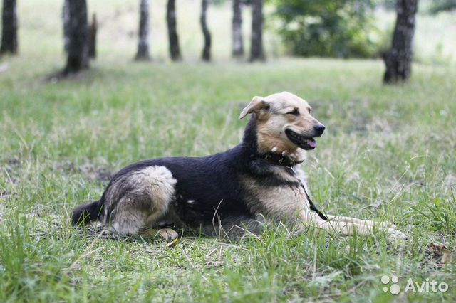 Улыбчивая собака Шелли в добрые руки купить на Зозу.ру - фотография № 2