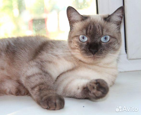 89137249811 Шикарная кошка Симона