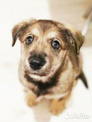 Грустный щенок никак не найдет дом купить на Зозу.ру - фотография № 2