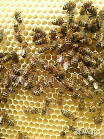 Пчело семьи