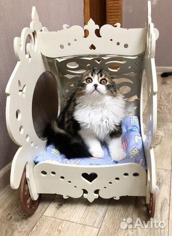 Шотландский котенок 89277068660 купить 1
