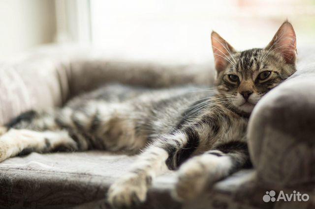 Котенок в добрые руки  89155387202 купить 5