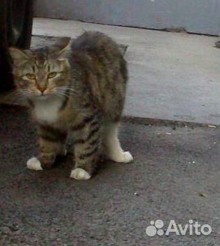 Кошечке жизненно необходим дом и любящая семья  89135639765 купить 1