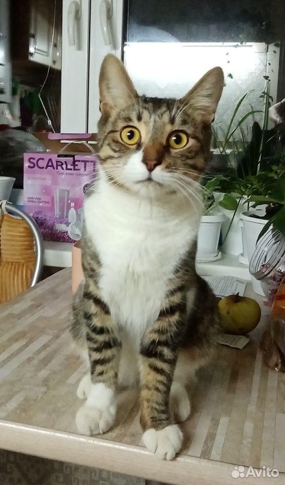 Молодой котик в добрын руки  89517237313 купить 1