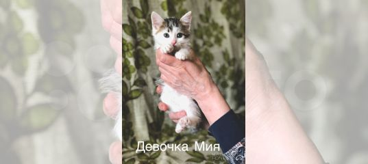 Чудесные котята купить в Санкт-Петербурге | Животные и зоотовары | Авито