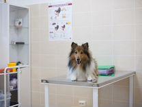 Современный и круглосуточный ветеринарный центр