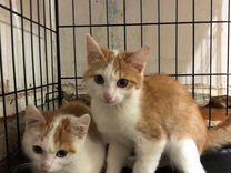 Котята-мальчики бесплатно в любящие руки