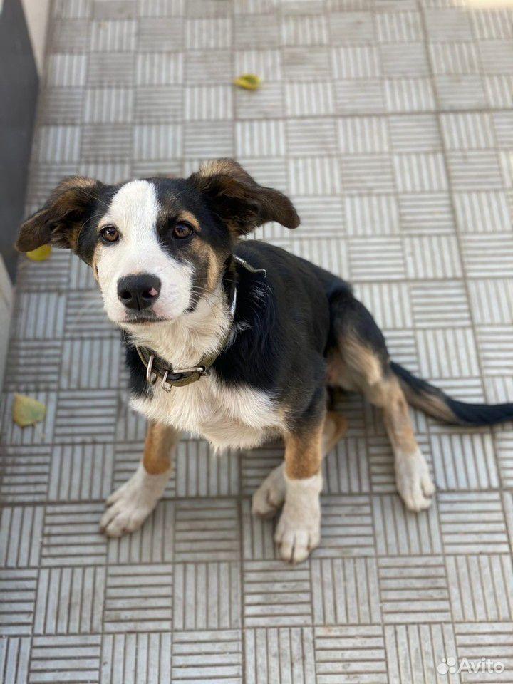 Собака  89375132713 купить 1