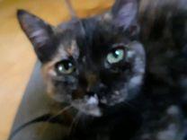 Кошечка — Кошки в Геленджике