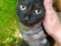Котята 2мес