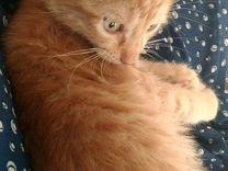 Ручной ласковый кото-ребенок
