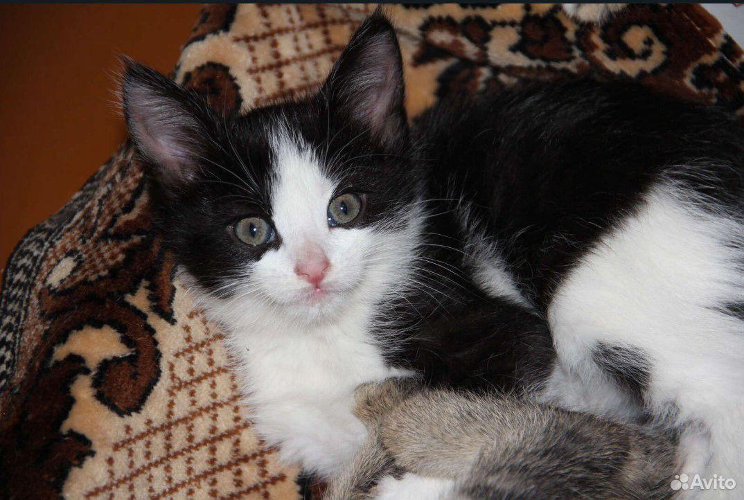 Котенок в хорошие и добрые руки  89163691460 купить 5