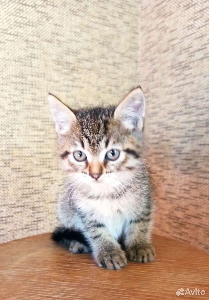 Кошка  89529644342 купить 1