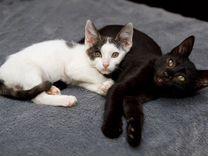 Малыш котёнок в добрые руки — Кошки в Геленджике
